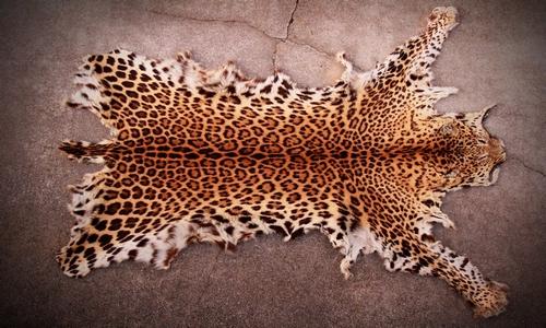 Buy Leopard Skins Online