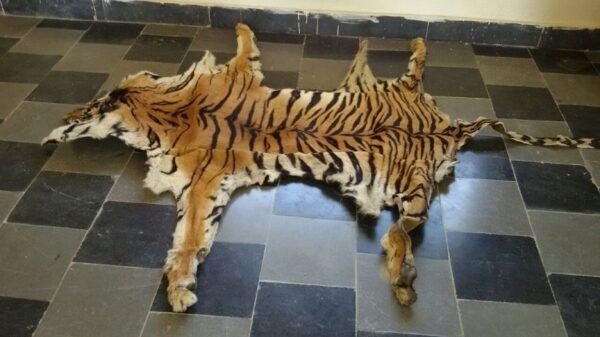 Buy Tiger Skins Online