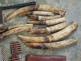 Ivory for sale online