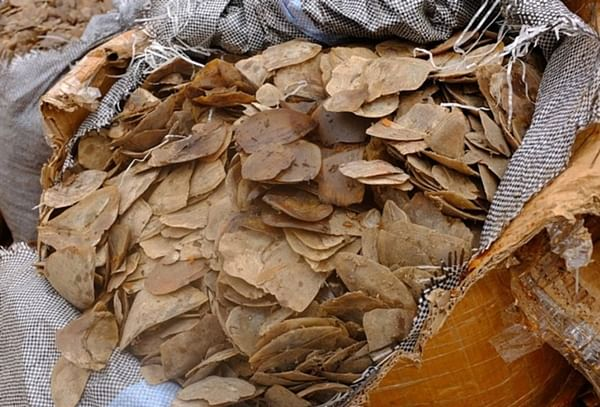 Pangolin Scales for sale in Vietnam