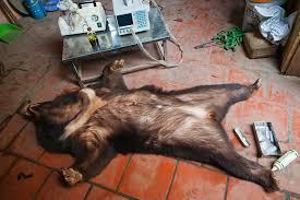 Buy Bear Bile Online