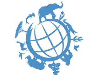 Wildlife Animals Trade